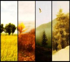 seasons_of_change_by_autumnsgoddess
